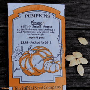 Planting Sugar Pumpkins for Fall, shared by Garden Up Green