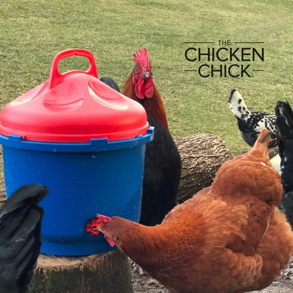 Poultry Nipple Drinker heated