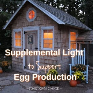 Supplemental light to support egg production - The Chicken Chick