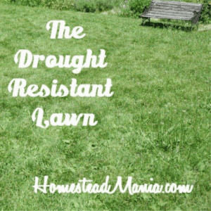 The Drought Resistant Lawn, shared by Homestead Mania