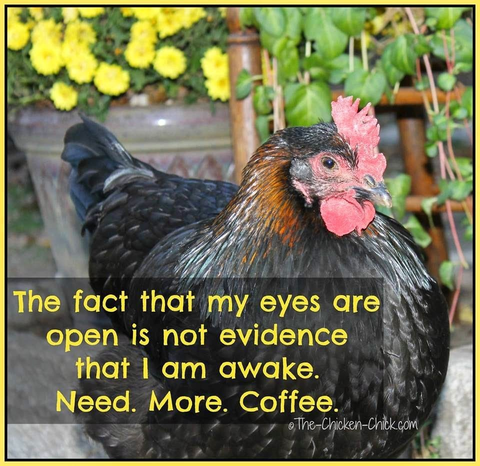 The fact that my eyes are open is not evidence that I am awake Need More Coffee