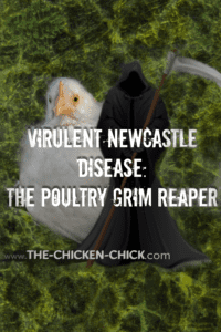 virulent newcastle disease in backyard chickens: the grim reaper