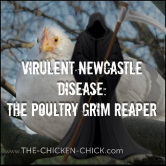 VIRULENT NEWCASTLE DISEASE: THE POULTRY GRIM REAPER