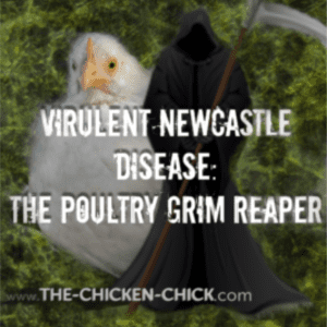 Virulent Newcastle Disease, shared by The Chicken Chick®