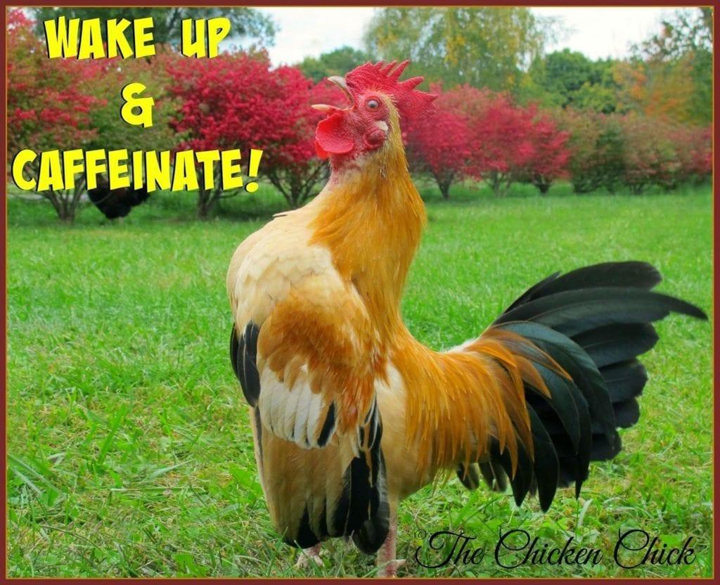Wake up and caffeinate