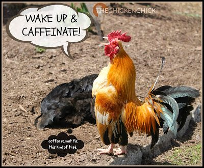 Wake up and caffeinate