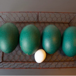 What to Do with Emu Eggs, shared by The Egg Farm
