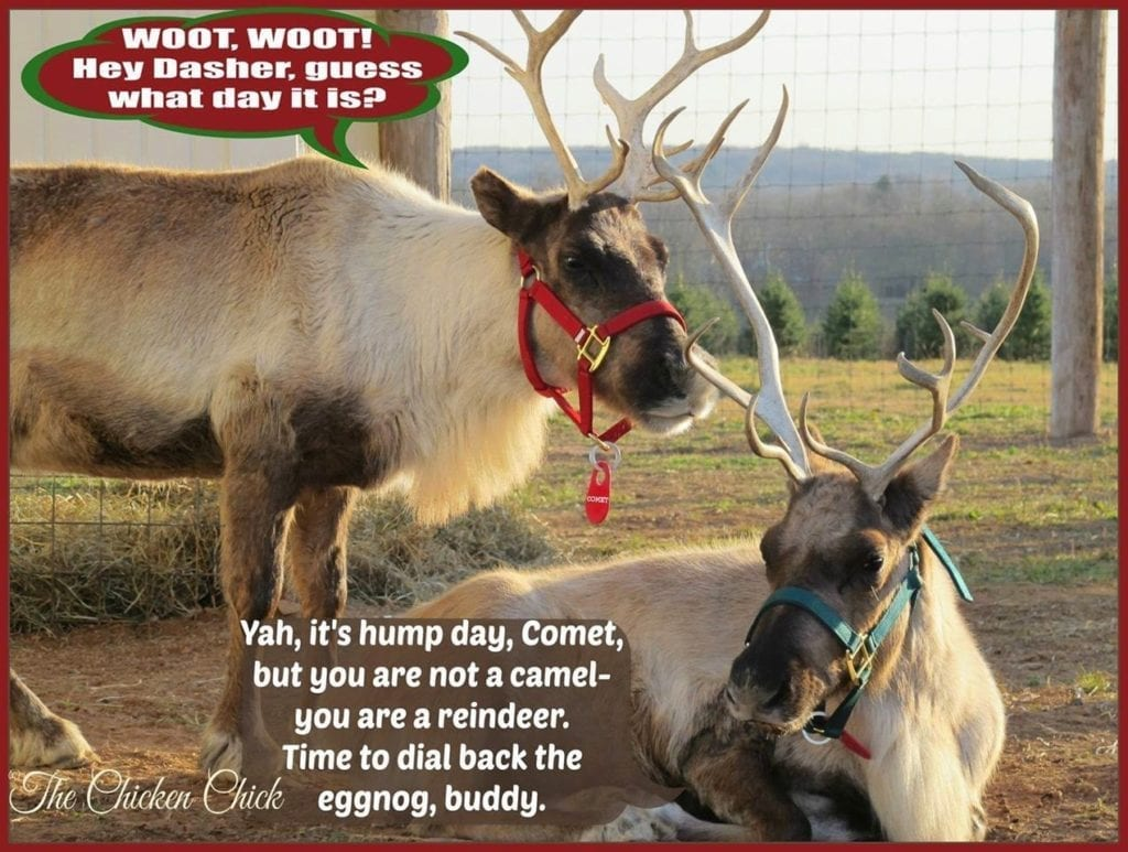 Woot Woot Hey Dasher Guess What Day It Is