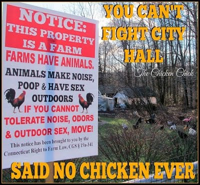 You cant fight city hall said no chicken ever