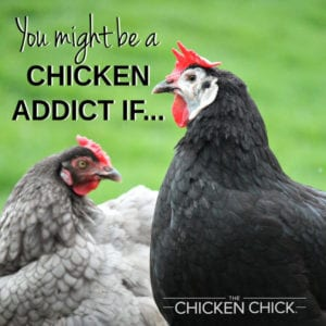 You might be a chicken addict if... | The Chicken Chick®