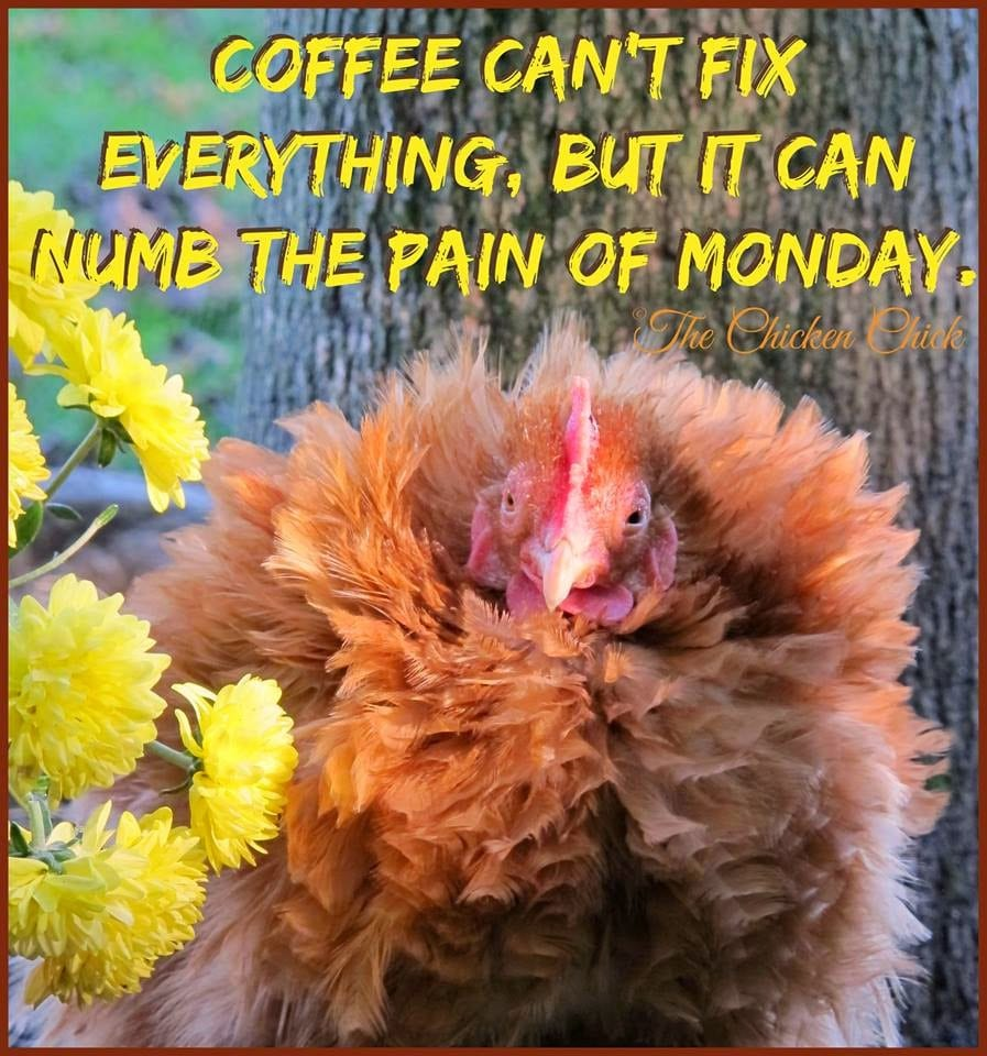 coffee cant fix everything but it can numb the pain of monday