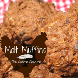 molt muffins - The Chicken Chick