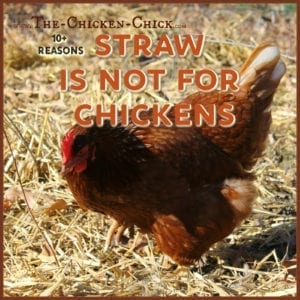 straw is not for chickens
