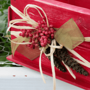 Amaryllis Box, shared by Garden Up Green