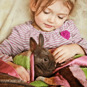 Beginner Tips for Raising Meat Rabbits, shared by Yellow Birch Hobby Farm