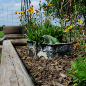 Beginner's Guide to Understanding Weed Control, shared by Garden Up Green