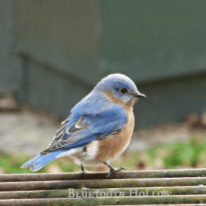 Birds of Winter, shared by Bluetooth Hollow