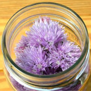 Chive Blossom Vinegar Infusion, shared by Grow a Good Life