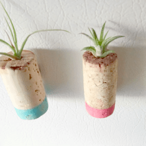 DIY Upcycled Cork Air Plant Magnets, shared by Living La Vida Holoka