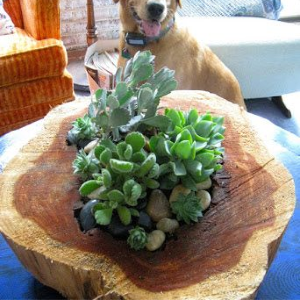 DIY Wood Slab Planter, shared by Repurposed for Life