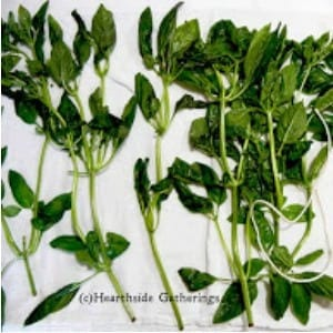 Drying and Saving Herbs, Part 1 shared by Heartside Gatherings