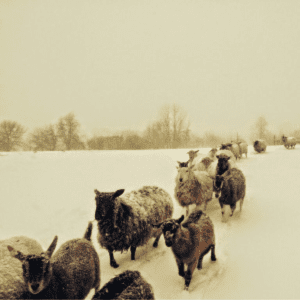 February Snow Storm, shared by Clearwater Farm