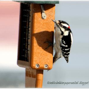 Homemade Wild Bird Suet blocks, shared by Thimbles, Bobbins, Paper & Ink