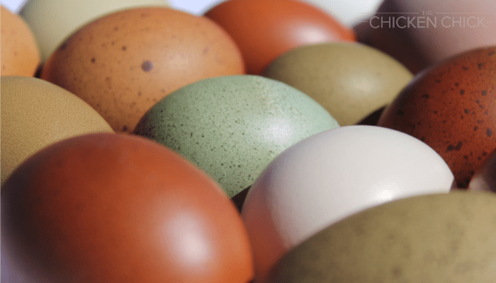 How a Hen Makes Eggs & Why Some are Weird