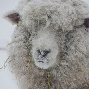 Pasture Happenings in the New Year shared by Mitten State Sheep and Wool