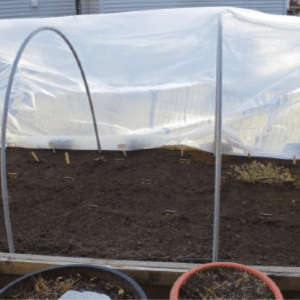 Starting a Winter Vegetable Garden, shared by The Freckled Rose