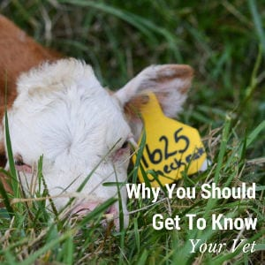 Why You Should Get to Know Your Vet shared by 4 Wiley Farm