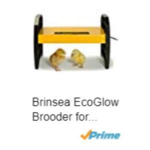 Brinsea-EcoGlow-Brooder.jpg