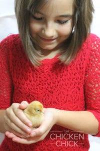 Handling chickens Salmonella risk