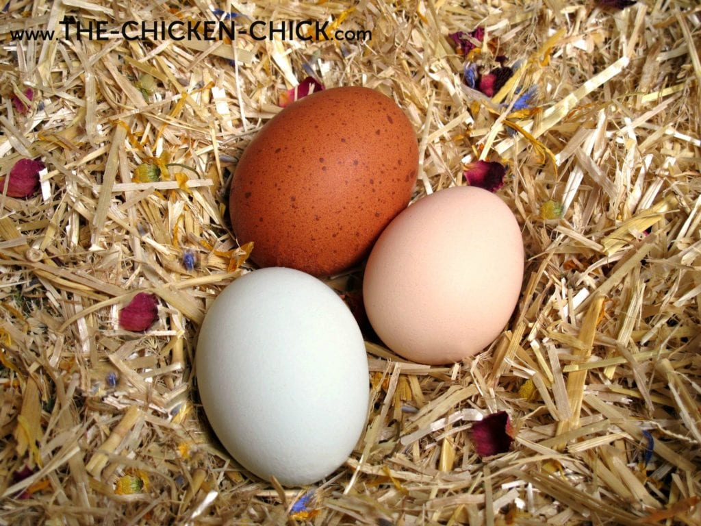 Eggs | The Chicken Chick®