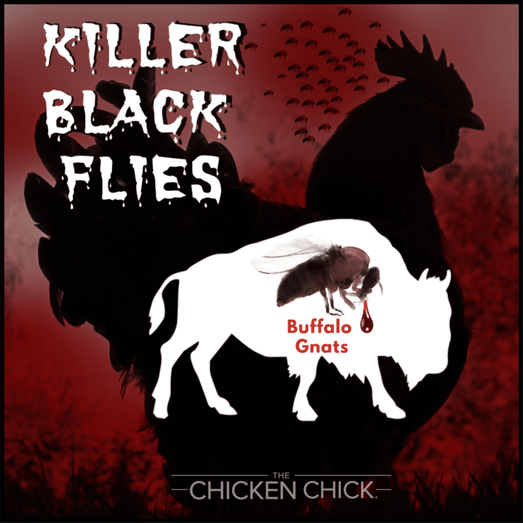 Buffalo Gnats Killer Black Flies & Backyard Chickens