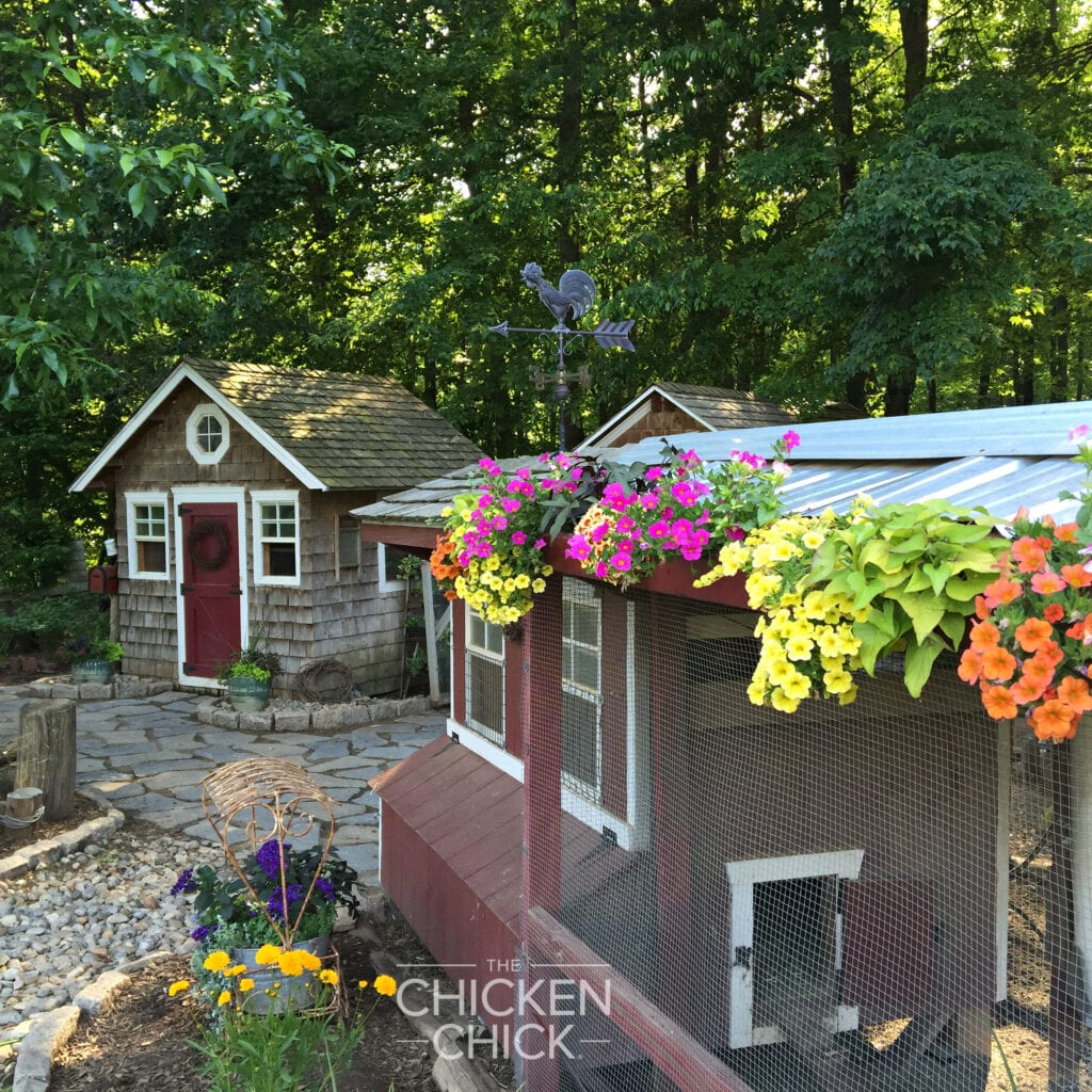 Chicken Coops | The Chicken Chick®