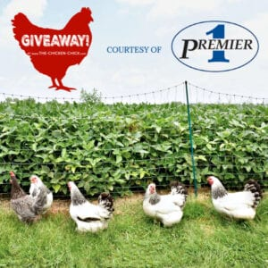 Premier 1 PoultryPlus® portable electric fencing Giveaway | The Chicken Chick®