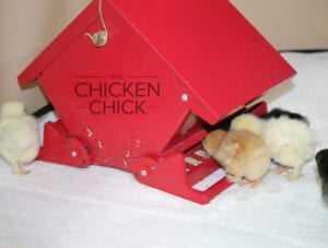 Squirrel-proof bird feeder | The Chicken Chick®