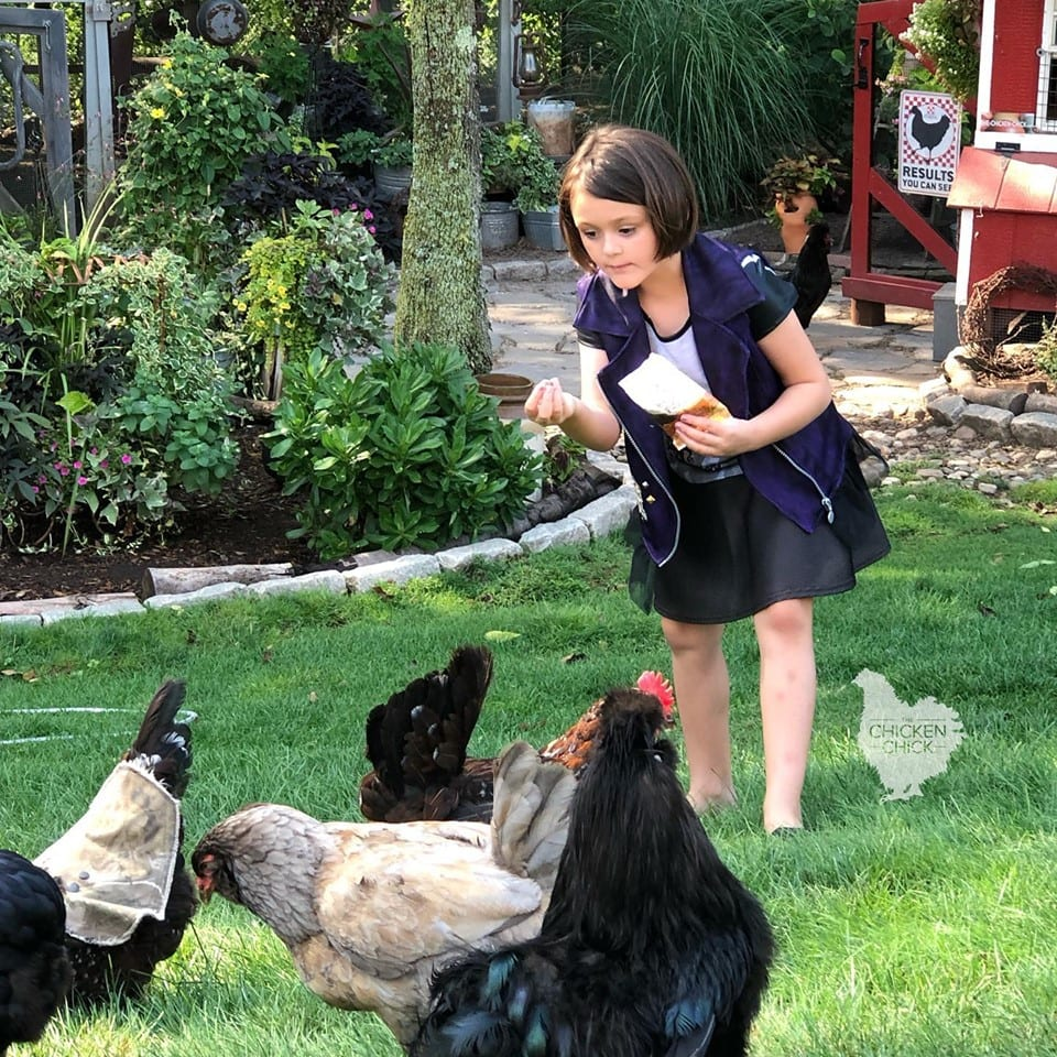Purina Farm to Flock Hen Treats