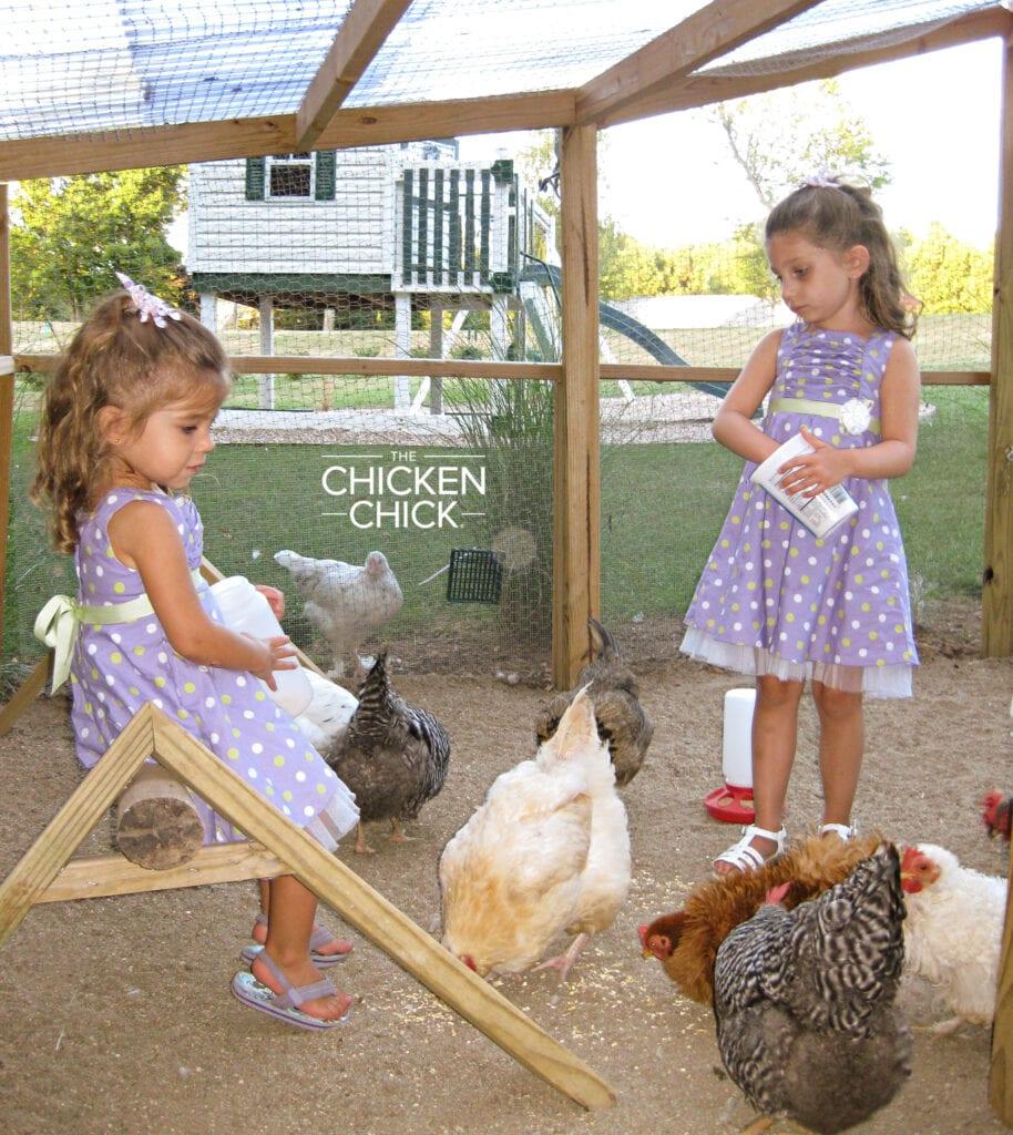 My Little Chicken Chicks feeding scratch to our first flock. #eek