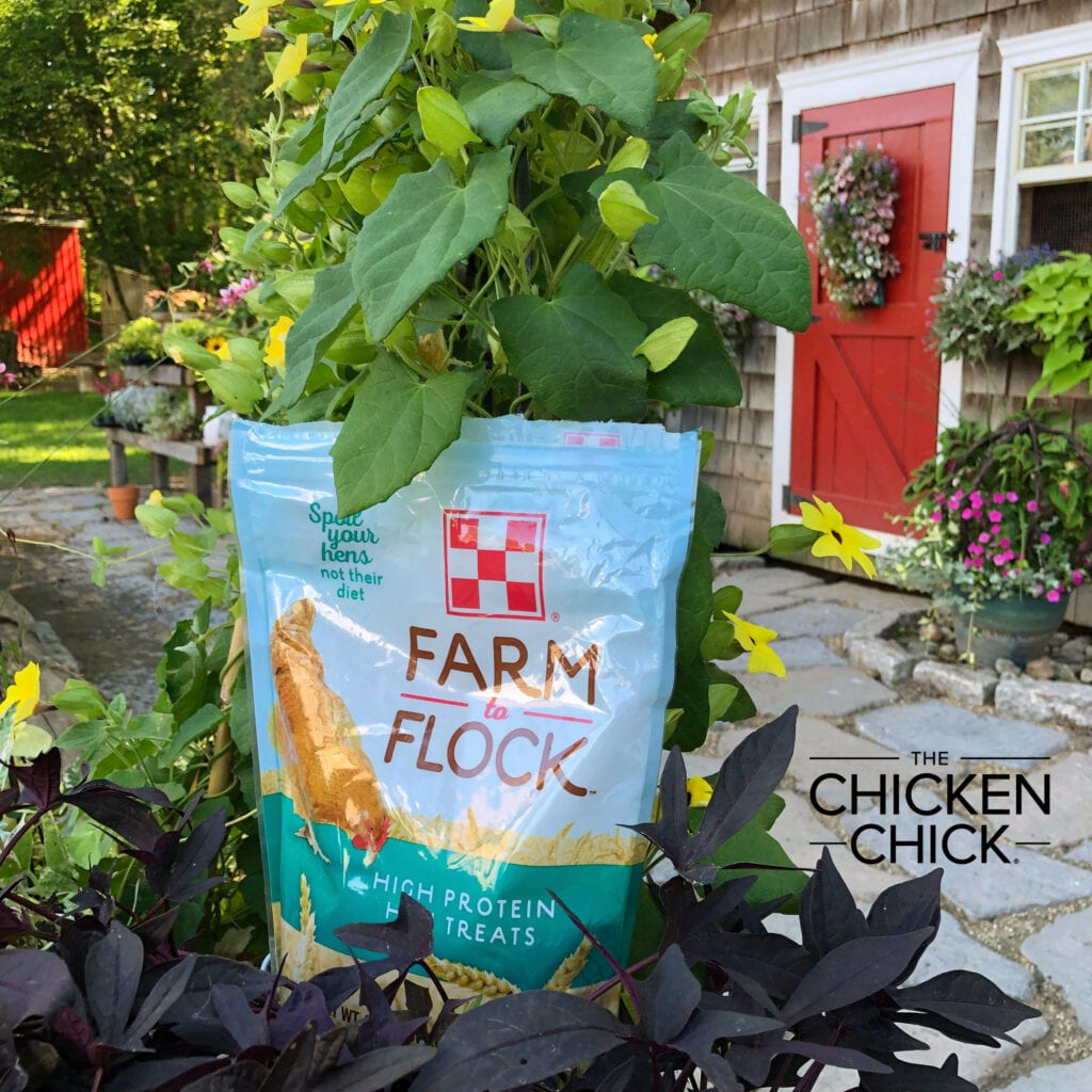 Purina Farm to Flock Hen Treats | The Chicken Chick®