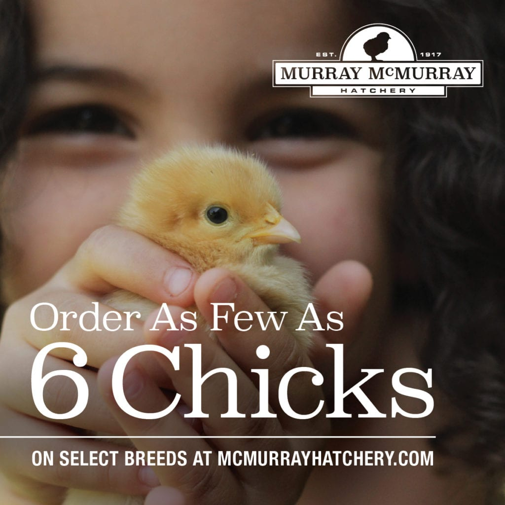 McMurrayHatchery-TheChickenChick-2020-NewLowMinimum.jpg