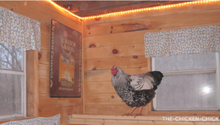 SUPPLEMENTAL LIGHT TO SUPPORT EGG PRODUCTION