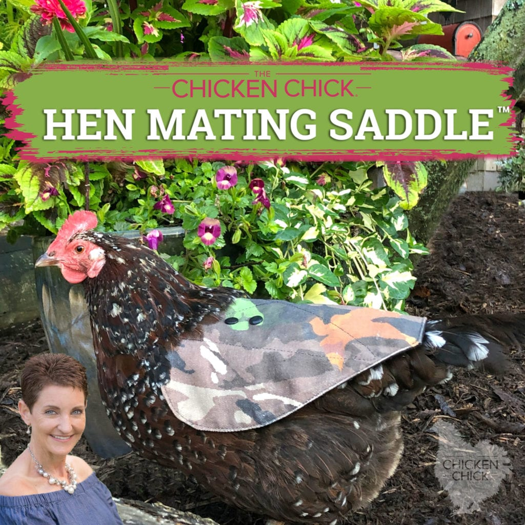 Hen-Saddle-scaled.jpg