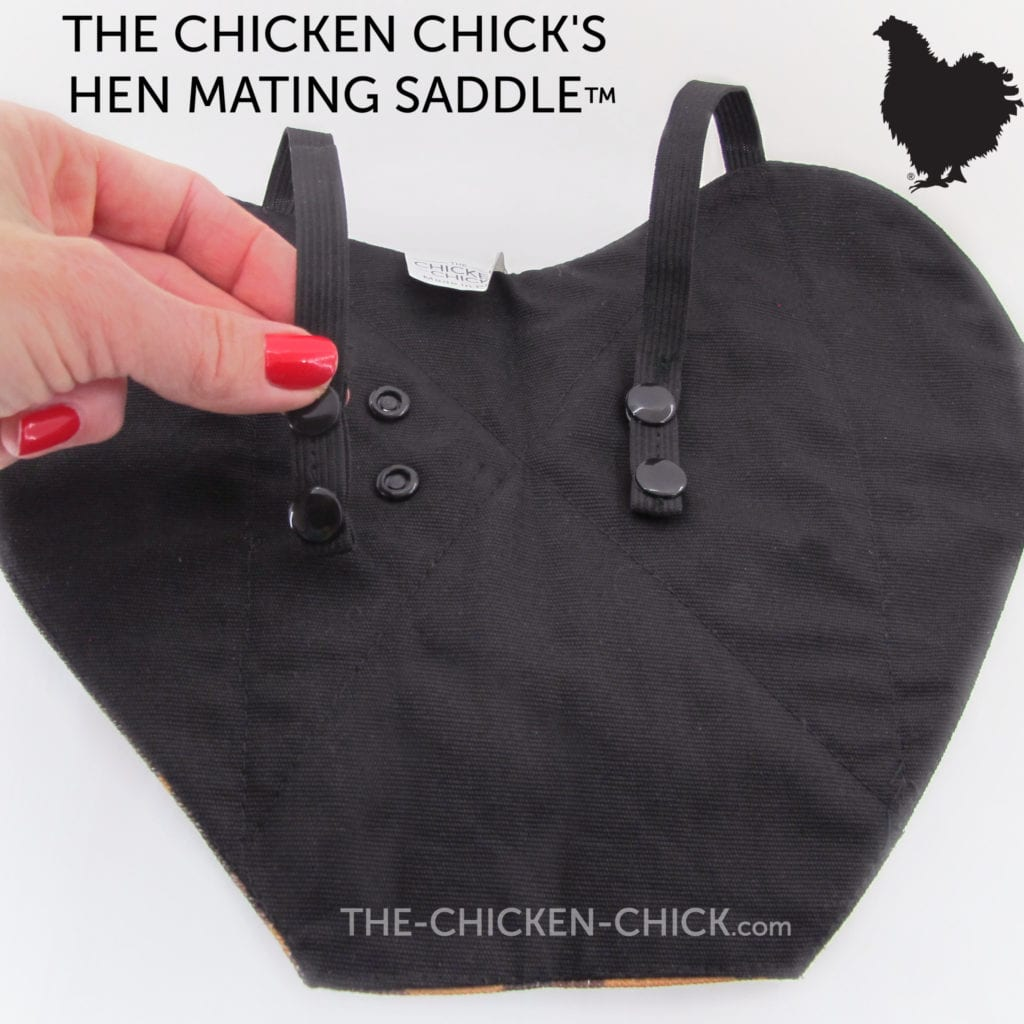 Chicken diapers and saddles | Chicken Saddle